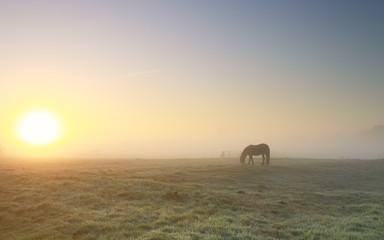 Wall Mural - horse grazing in dense fog at sunrise