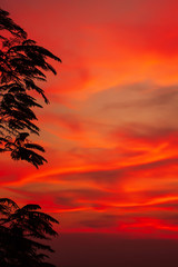 Dramatic sunset sky over a tropical forest.