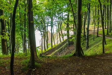 Park Narodowy Jasmund - Rugia