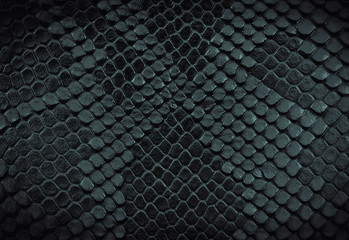 Wall Mural - Snake skin background. Close-up.