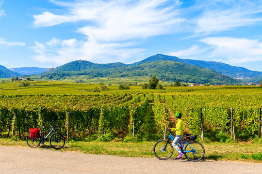 Young woman cyclist stopping by vineyards on Alsatian Wine Route near Ribeauville village, France