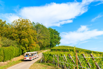 Tourist train among vineyards on Alsatian Wine Route near Riquewihr village, France