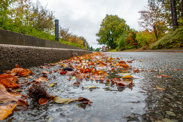at the roadside lies brown foliage, which fell from the trees, in a puddle