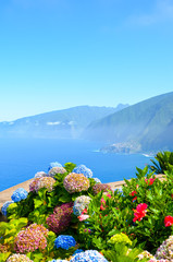 Fond de hotte en verre imprimé Hortensia Colorful Hydrangea flowers and the beautiful northern coast of Madeira Island, Portugal. Typical Hortensia flower. Amazing coast by Ribeira da Janela. Atlantic ocean landscape. Haze in background