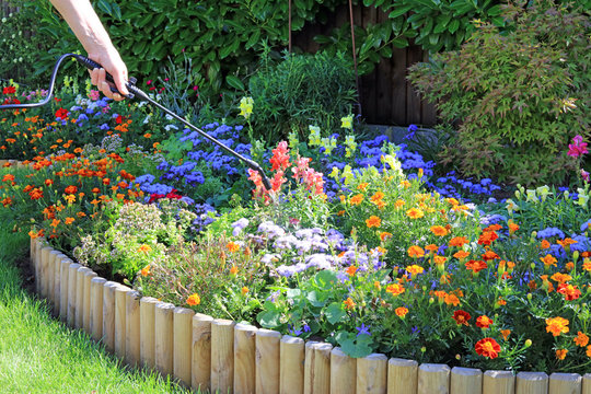 Spraying A Flower Border To Protect And Promote Growth.