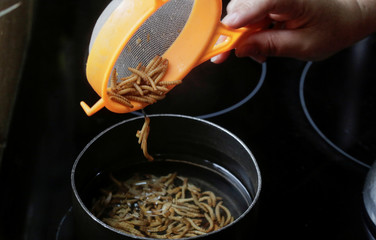 Gabriela Soto cooks cricket larvae, as her husband biologist Federico Paniagua promoting the ingestion of a wide variety of insects, as a low-cost and nutrient-rich food in Grecia