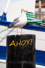 Maritime Sea Bird Scene with Greeting Text / Beautiful maritime seagull portrait on metal post in front of boat detail at harbor as post card motif - text AHOY! (copy space)