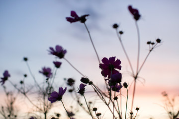 wildflower silhouette vibrant colorful sunset sky