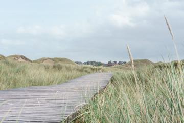 Fototapete - Bohlenweg in den Dünen von Amrum