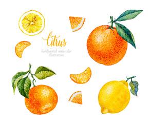 Watercolor Orange, Lemon, Mandarin. Watercolor botanical illustration. Citrus fruit.