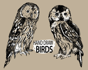 Wall Murals Owls cartoon Owls. Set of images of birds. Drawing by hand in vintage style. Drawing with ink on a white background.