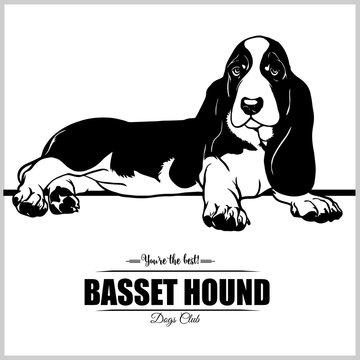 Basset Hound Dog - vector illustration for t-shirt, logo and template badges