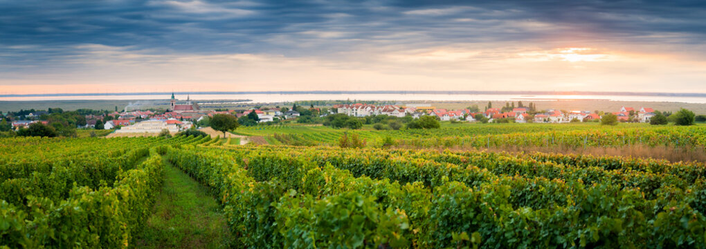 Vineyards near village of Rust on the lake in Burgenland