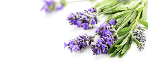 Beautiful Lavender flowers bunch on a white. Shallow DOF