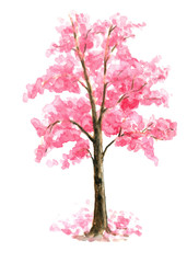 Pink Cherry Blossom tree watercolor painting hand drawn on isolated white background