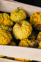 Close-up of yellow gourds