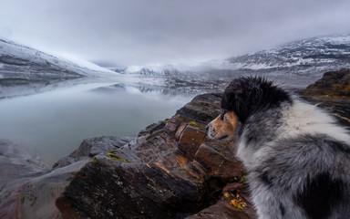 hund schaut auf einen gletschersee in norwegen im winter