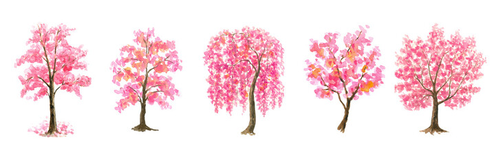 Pink Cherry Blossom tree set watercolor painting hand drawn on isolated white background