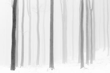 Czarno-biały las we mgle i lodowata przyczepność w trudną zimę. - 293348376