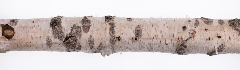 Poster de jardin Bosquet de bouleaux birch trunk with birch bark isolated on white background
