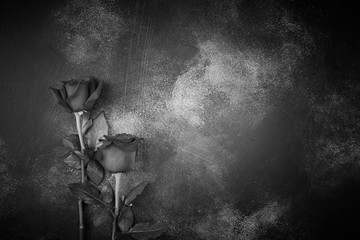 Roses lie on a textured background. Space for your text. Black and white image