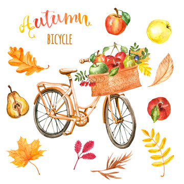 Watercolor autumn bicycle clipart. Light orange retro bike with garden basket and apples. Seasonal fruits, berries, colorful tree leaves, isolated on white background. Romantic fall backdrop.