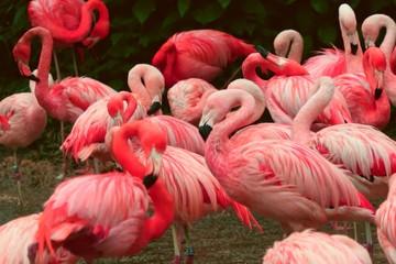 In de dag Flamingo pink flamingo in the zoo