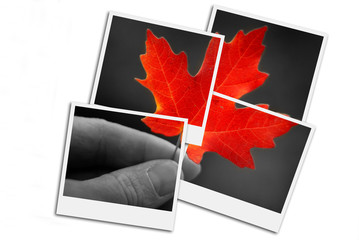Hand Holding Fall Red Maple Leaf Foliage Autumn Film Frames Photographs