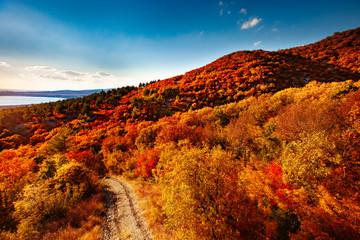 In de dag Rood traf. Autumn landscape beautiful colored trees. Wonderful picturesque background. Selective focus.
