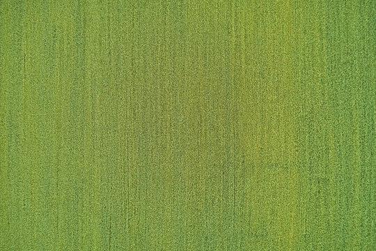 Aerial view of a grass plantation. Grass meadows top view.