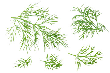 fresh dill isolated on white background. top view
