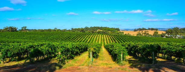 Winery in Barossa Valley in South Australia.