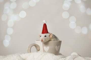 Cute little rat with Santa hat in cup on knitted blanket against blurred lights. Chinese New Year symbol