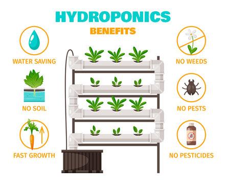 Hydroponics Benefits Concept