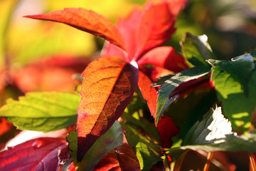Close-up of fall-colored leaves