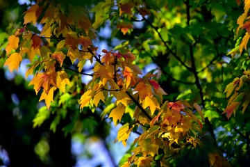 Yellow Green Red Leaves