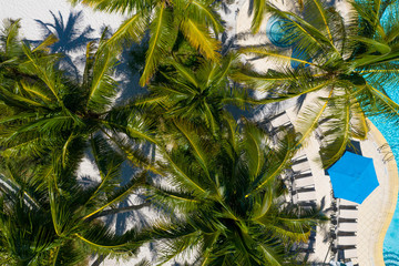 Bird`s eye point of view of palm tree leaves from the sky and a swimming pool.