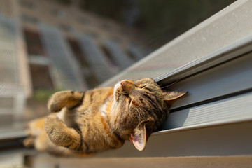 Cat sleeping at the window with screen