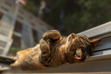 Cat sleeping at the window
