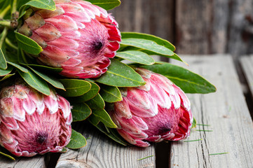 Close up of three protea flower stalks on a rustic wooden table