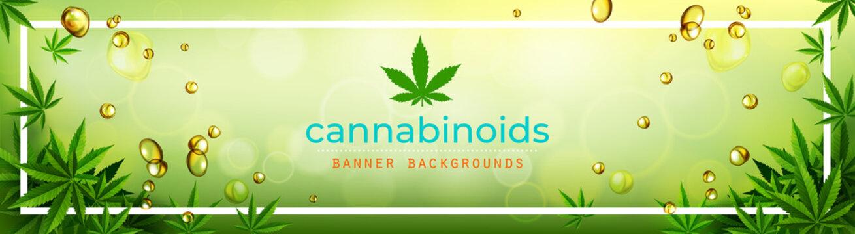 Cannabis or marijauna medical banner vector design.