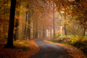 Foto auf AluDibond Natur The road through the autumn forest, Ypres, Belgium