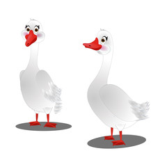 Two White Geese - Cartoon Vector Image