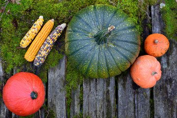 Bright colorful pumpkins lying on green mossy rotten old wood planks photographed from above with space in the middle for Halloween