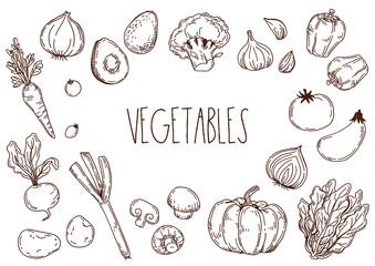 野菜の手描きイラスト