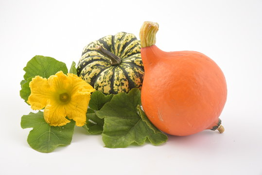 Fresh pumpkin vegetable with green leaves and flower isolated on white background. Hokaido and sweet dumpling squash.