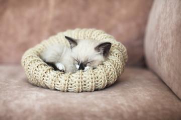 Kitten sleeping on the sofa