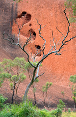 Dry tree branches against red rock, Northern Territory Australia.jpg