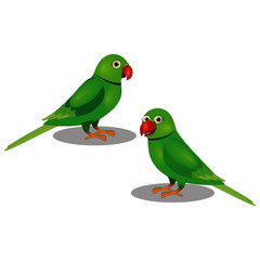 Two Beautiful Parrots - Vector Image
