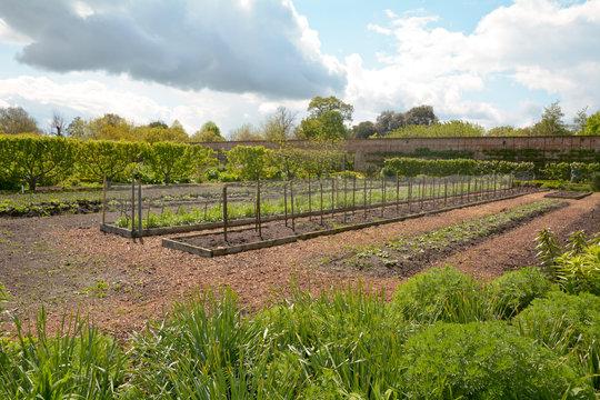 Garden beds in allotment